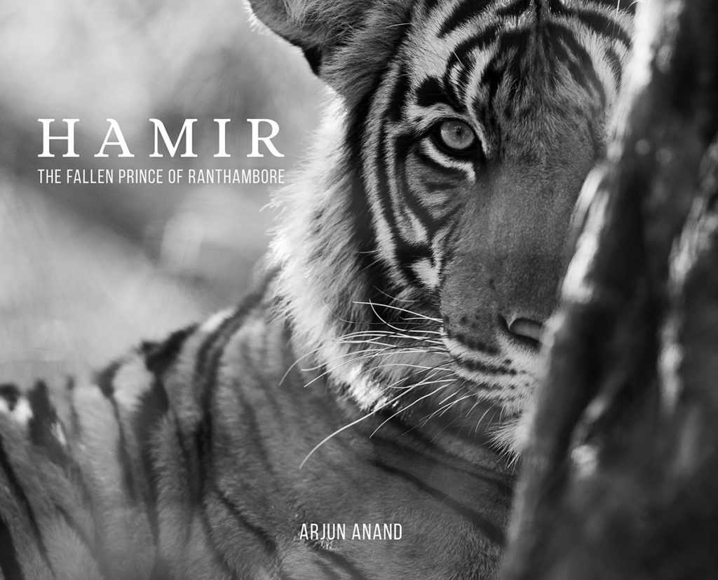 Hamir: The Fallen Prince of Ranthambhore, photography, wildlife photography book on the tigers of Ranthambore.